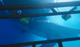 """Erster deutscher Trailer zum Hai-Horror und US-Erfolg """"47 Meters Down"""" – ab Dezember im Handel"""