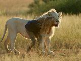 Mia und der weiße Löwe, Studiocanal GmbH / Kevin Richardson