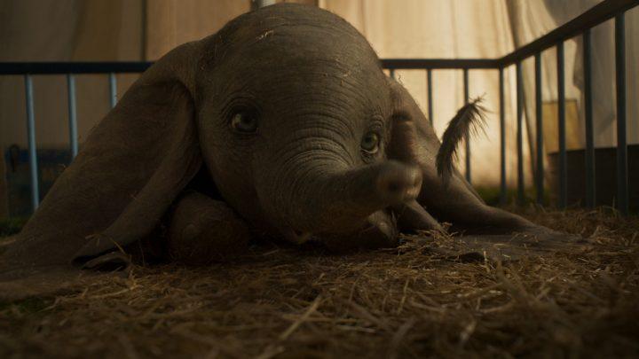 """""""Dumbo"""": Live-Action-Film zu Tim Burtons fliegendem Elefant erhält neuen Trailer"""