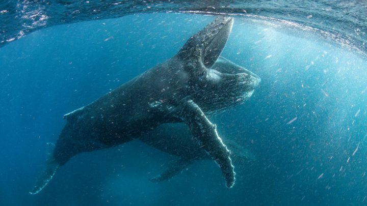 """Neue Einblicke in die Netflix-Natur-Serie """"Unser Planet"""": Vom Dschungel bis in die Tiefen der Ozeane"""